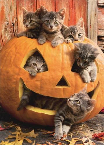 halloween-kittens
